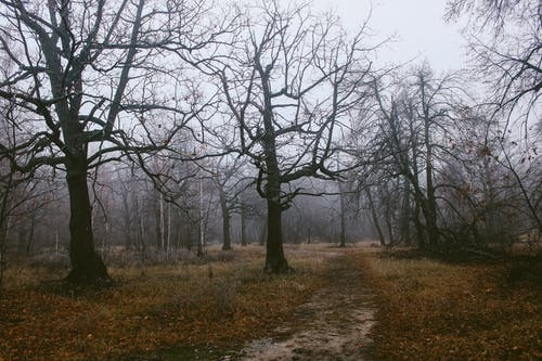 Leafless trees in misty autumn forest