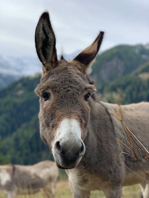 귀여운, 농장, 농촌의, 동물의 무료 스톡 사진