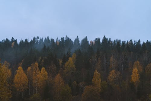 Green and Brown Trees Under White Sky