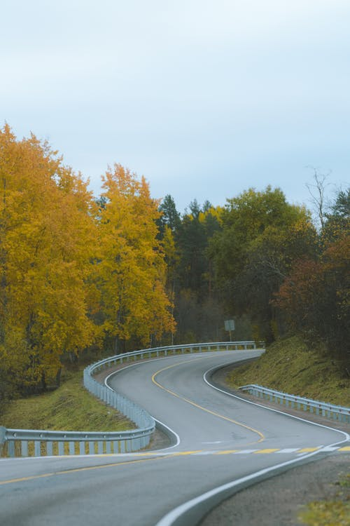 Gray Concrete Road Between Green and Yellow Trees