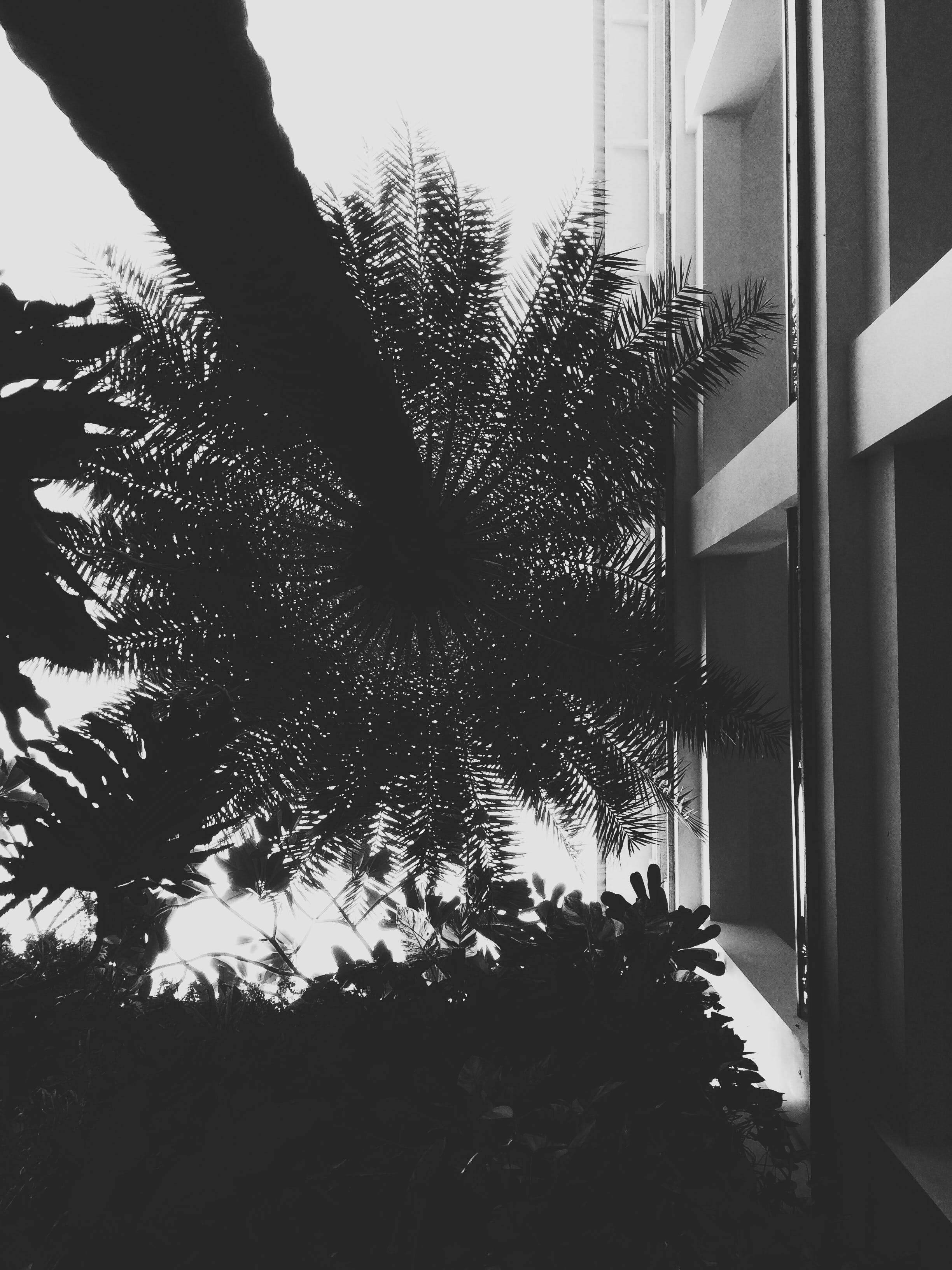 Free stock photo of black-and-white, building, trees, leaves