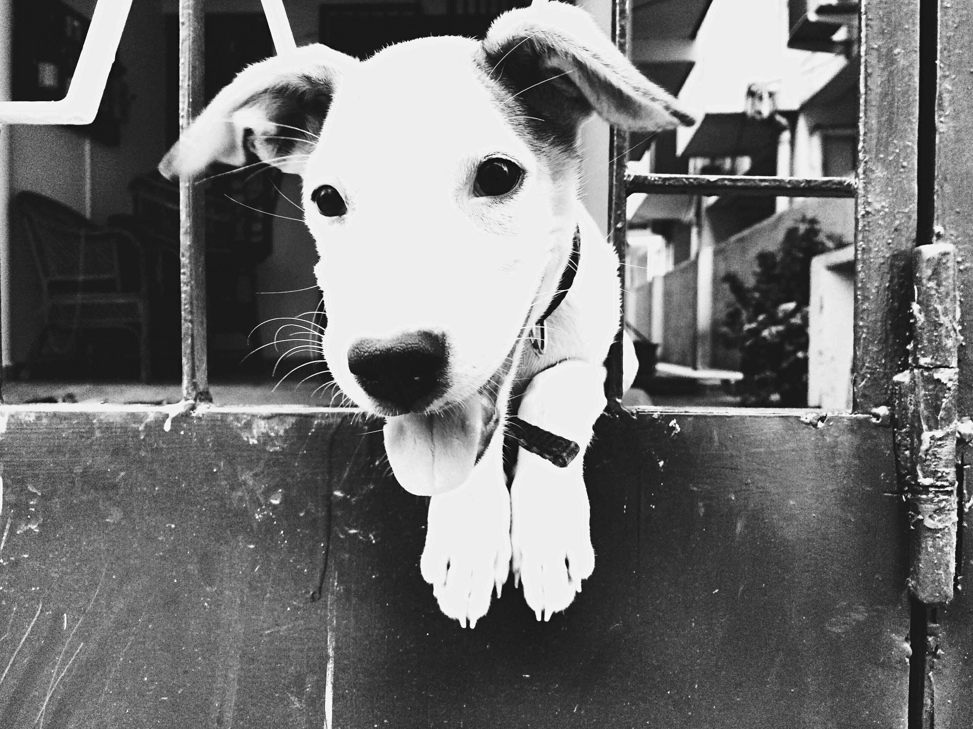 Kostenloses Stock Foto zu freund, gott, hund, jack