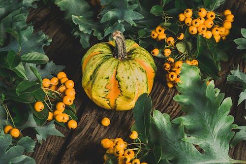 Gratis lagerfoto af agern, appelsinbær, baggrund, baggrundsbillede
