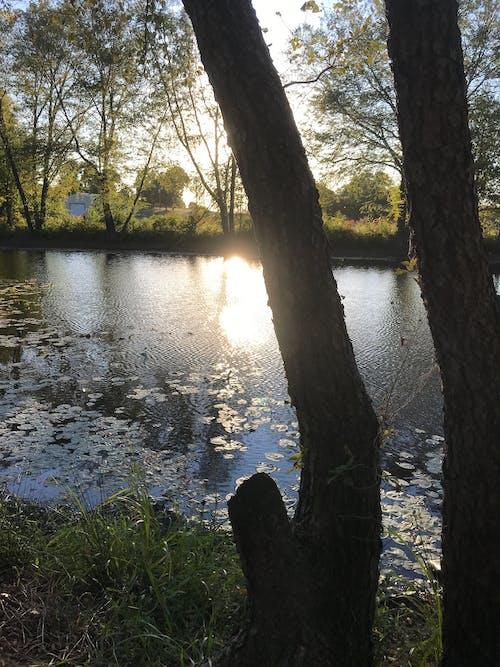 litrachallenge, 나무, 야외에서, 태양의 무료 스톡 사진