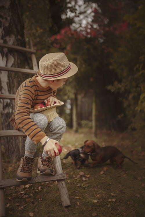Foto profissional grátis de adulto, ao ar livre, cachorro, cão