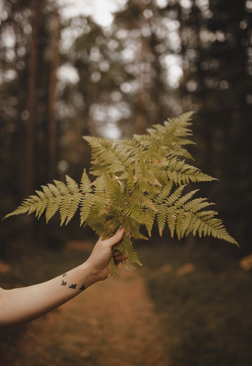 Crop faceless woman demonstrating fern leaves in forest