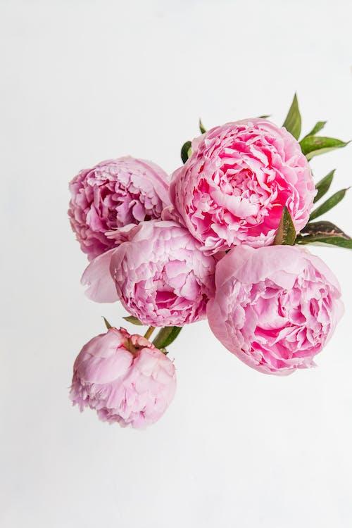 Immagine gratuita di amore, biglietto, bouquet