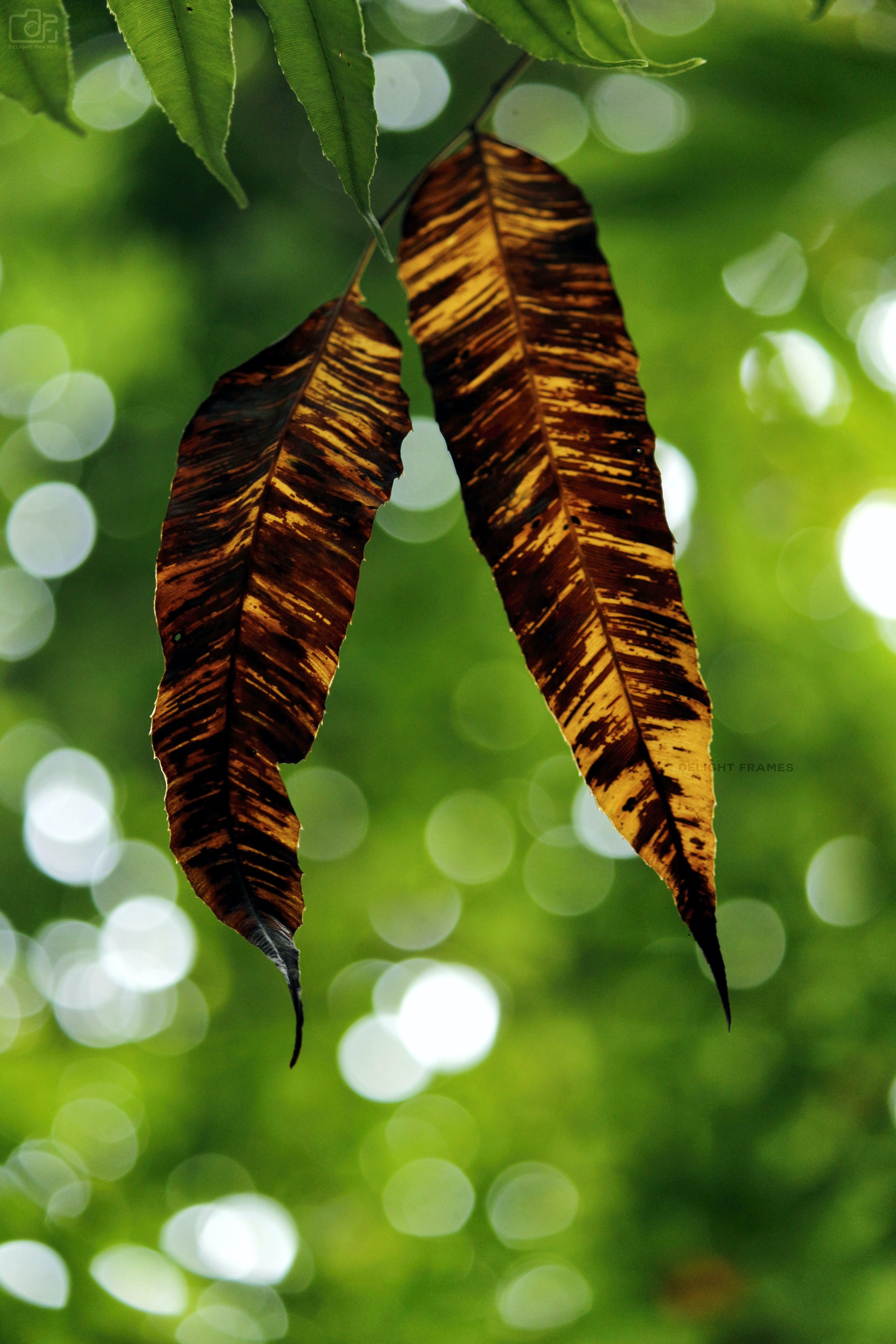 Free stock photo of autumn, backlight, bokeh, bright
