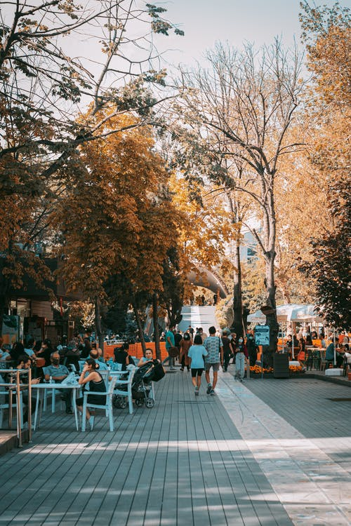 People Sitting on White Plastic Chairs Near Brown Trees