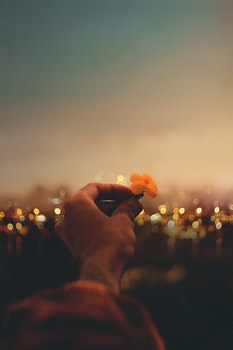 Free stock photo of hand, lights, photography, petals