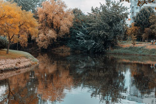 Free stock photo of eskişehir, forest, kanlıkavak