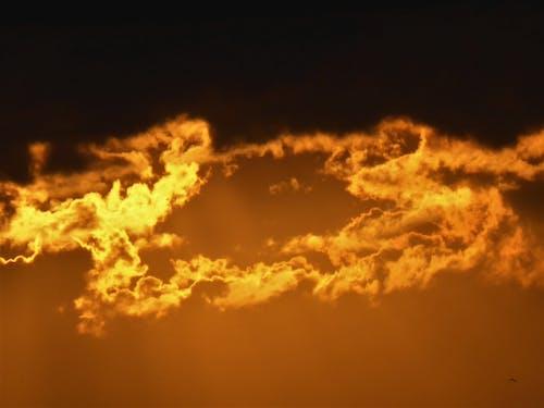 Free stock photo of golden sun