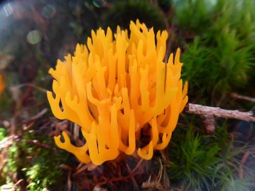 Free stock photo of mushroom