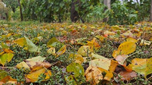 #葉子#秋天 的 免費圖庫相片