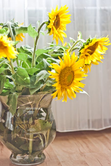 Sunflowers In A Vase 183 Free Stock Photo