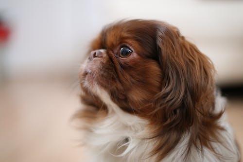 Free stock photo of adorable, animal, brown
