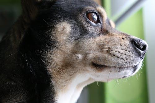 Free stock photo of animal, brown, close up