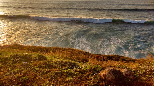 Immagine gratuita di acqua, alba, bagnasciuga, erba