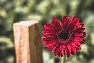 petals, blur, flower