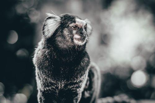 Gratis stockfoto met #animals #monkey #nature