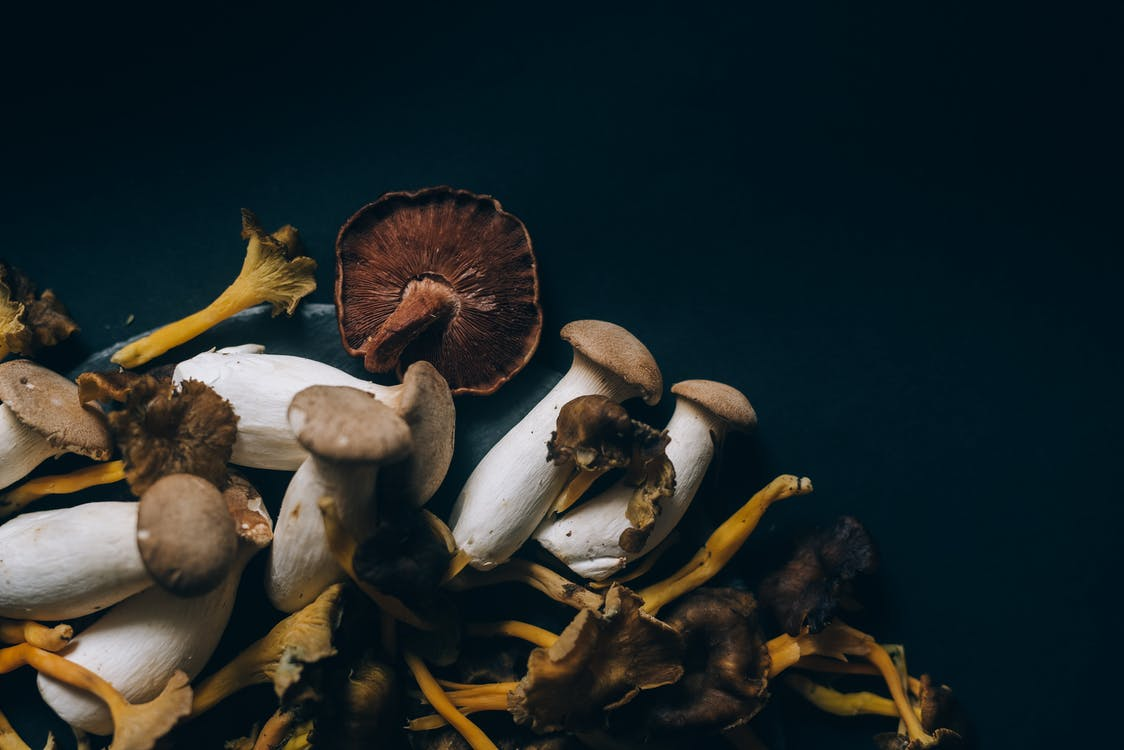 Brown and White Mushrooms in Black Background