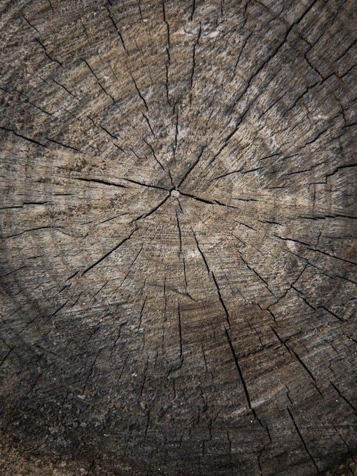 Photos gratuites de aboiement, arbre, bois, bois de chauffage