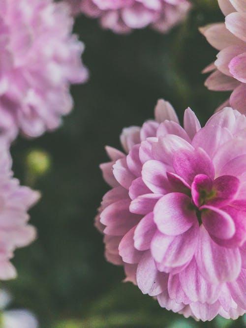 Photos gratuites de botanique, brillant, couleur, croissance