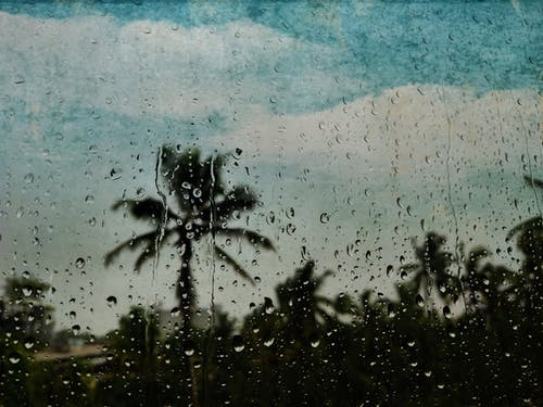 Free stock photo of blue sky, blurred backgound, climate, coconut trees