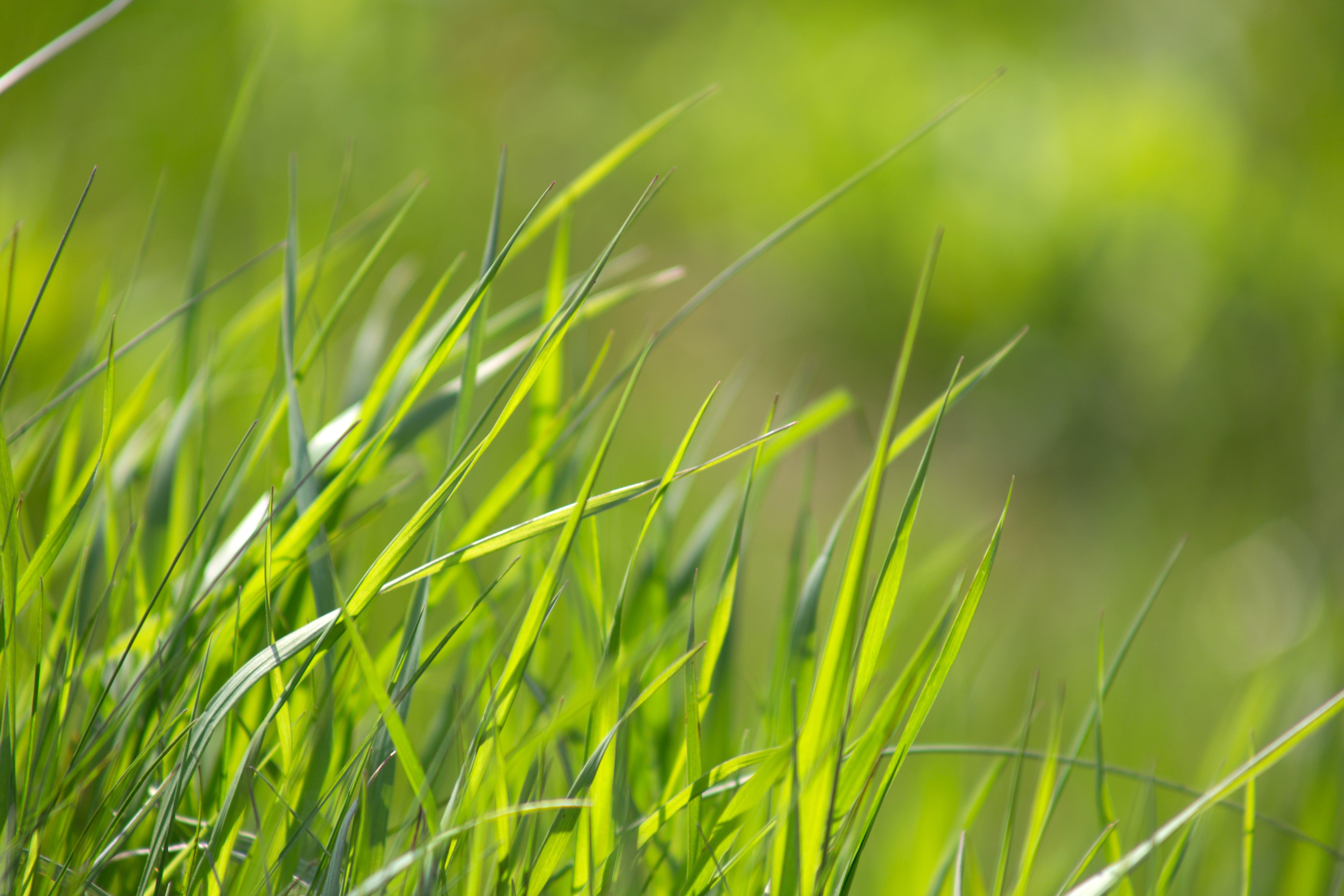 blur, close-up, depth of field