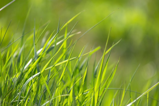Free stock photo of nature, grass, blur, leaves