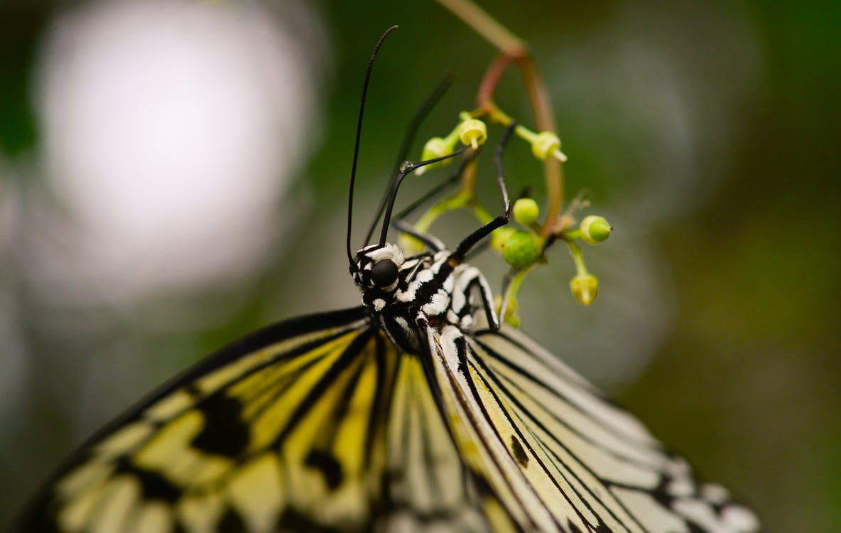 Yellow and Black Butterfly on Flower