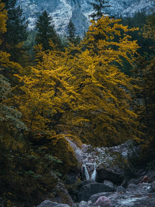 Spectacular scenery of small waterfall flowing on rocky terrain under autumn trees against high mountains in daytime
