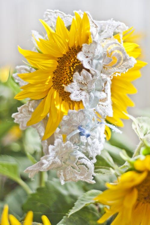 Fotobanka sbezplatnými fotkami na tému biela, kvet, kvety, podväzok