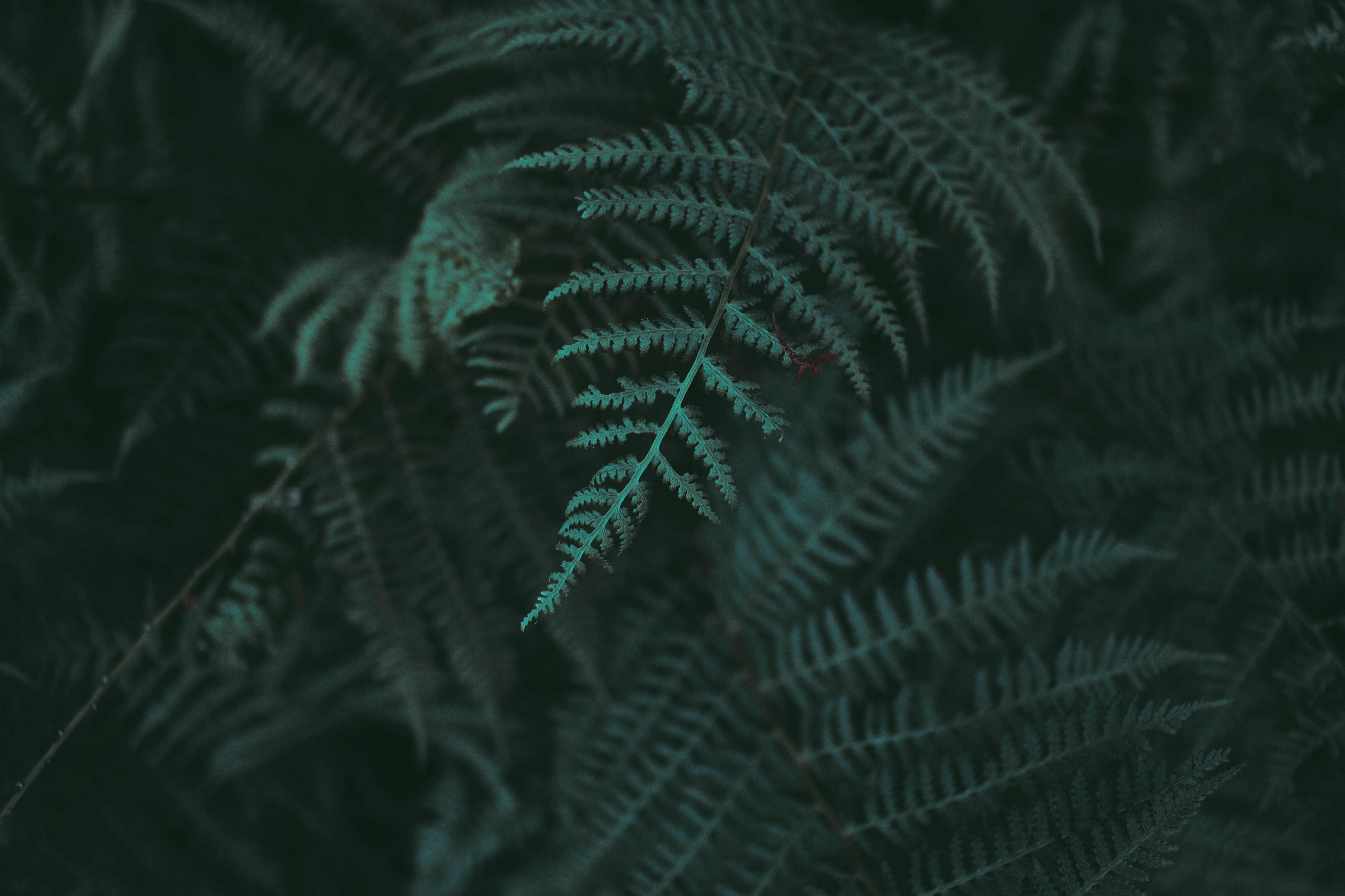 Free stock photo of dark, dark green, green, mystic
