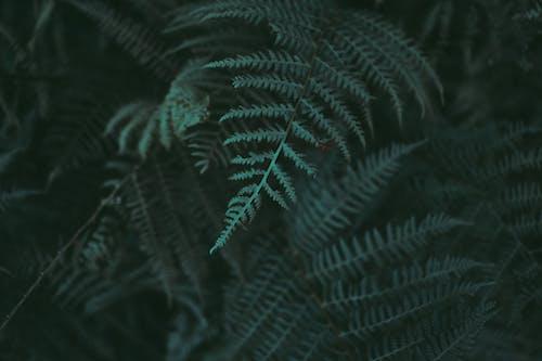 Kostenloses Stock Foto zu dunkel, dunkelgrün, grün, mystiker