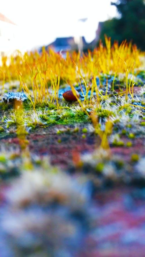 Kostnadsfri bild av fokus, gräs, jord, närbild