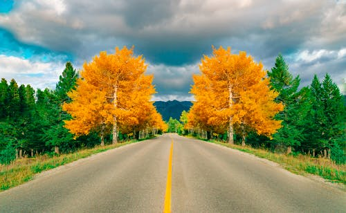 Gray Asphalt Road Between Green and Brown Trees Under Blue and White Cloudy Sky