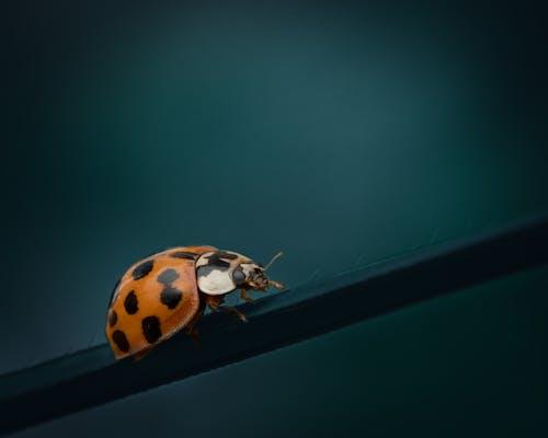 Ladybug on thin plant leaf in evening nature