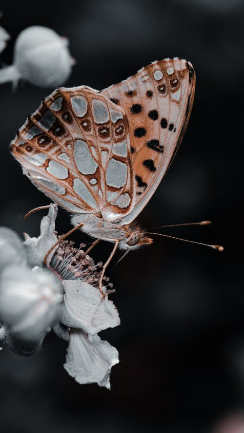 Macro Photography of a Brown Butterfly Perched on White Flower