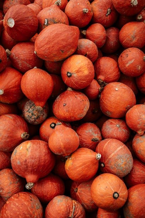 Gratis stockfoto met 31 oktober, amerikaanse feestdag, boerenbedrijf