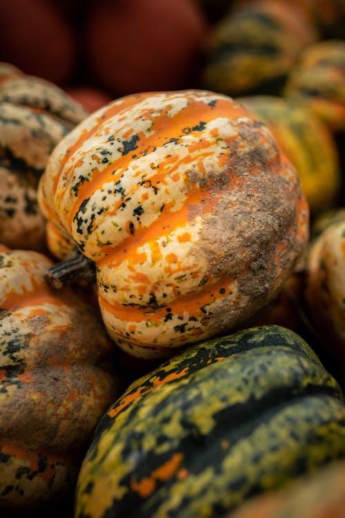 Close-Up Photo of Fresh Pumpkin