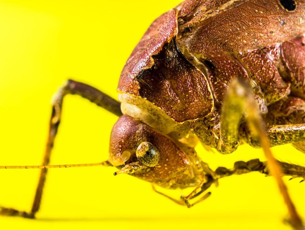 detailný záber, hmyz, makro