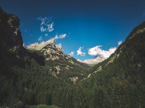 Amazing scenery of rough rocky mountains with green coniferous trees under clear blue sky
