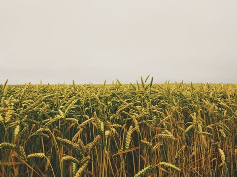 Free stock photo of agriculture, farm, horizon, fields