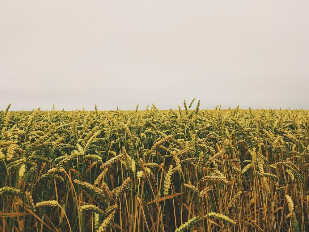 αγρόκτημα, γη, γήπεδα
