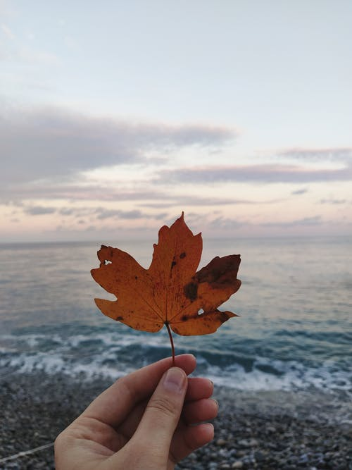 A Person Holding a Maple Leaf