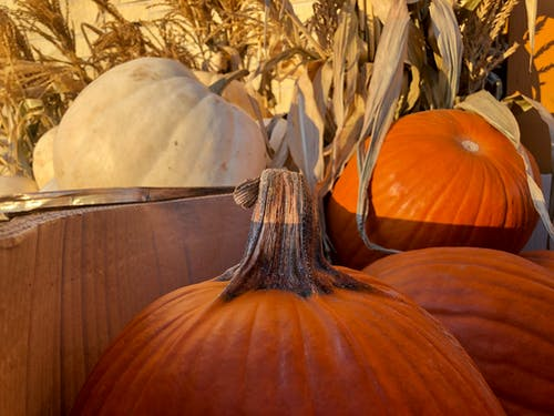 Free stock photo of colors of autumn, pumpkins, thanksgiving