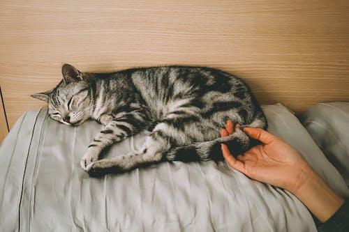 Gratis lagerfoto af behåret, dyr, hånd