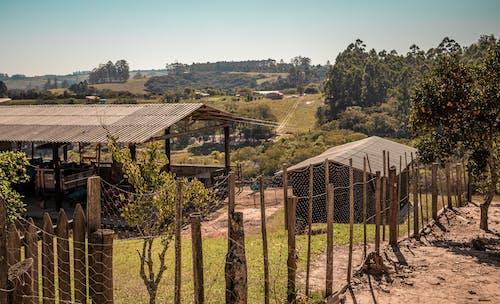 Бесплатное стоковое фото с архитектура, вино, виноградник, дерево