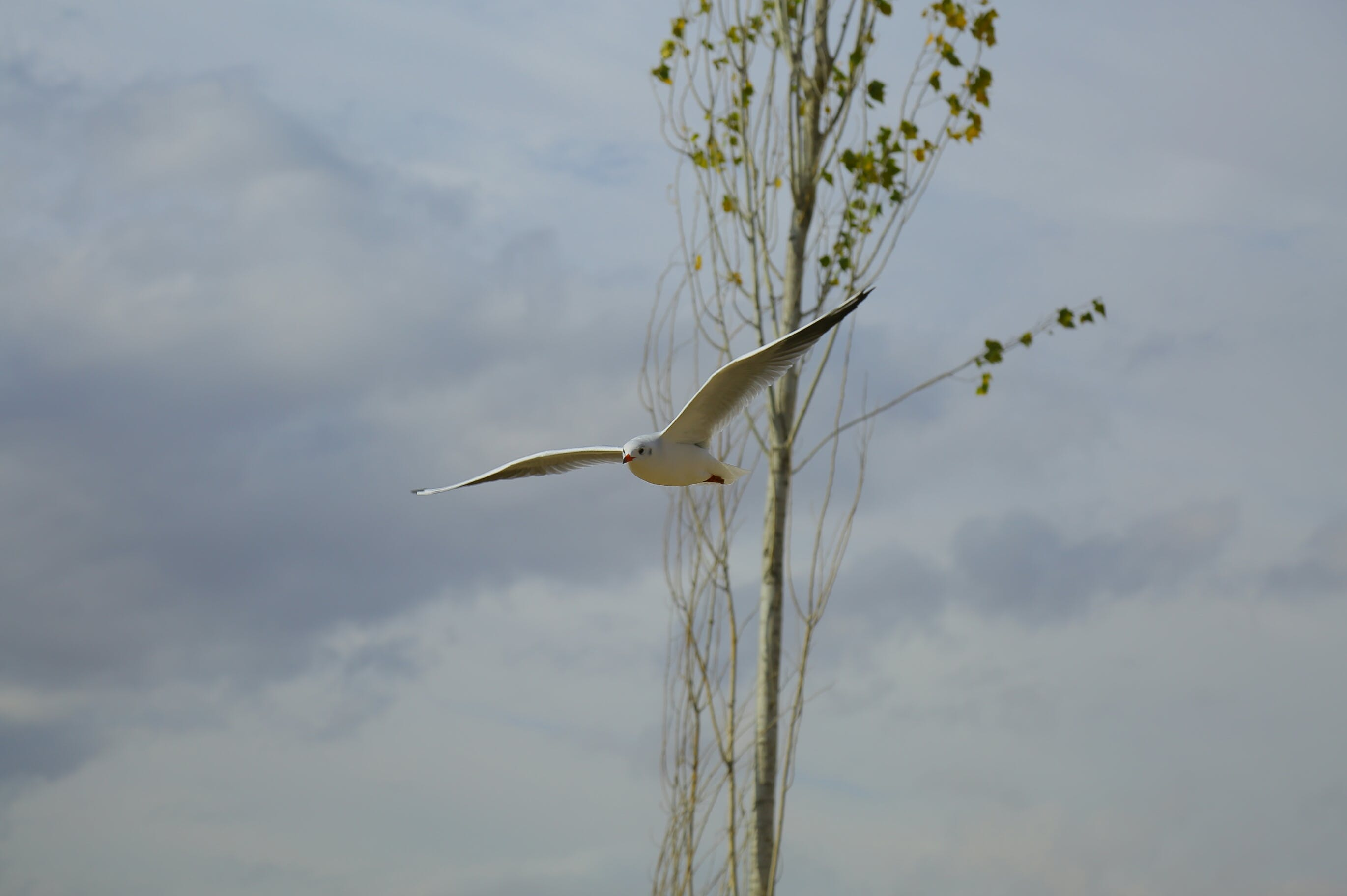 White Feathered Bird on Mid Air